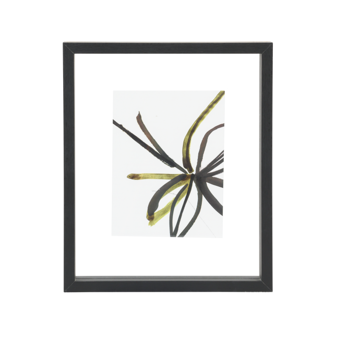 frame-medium
